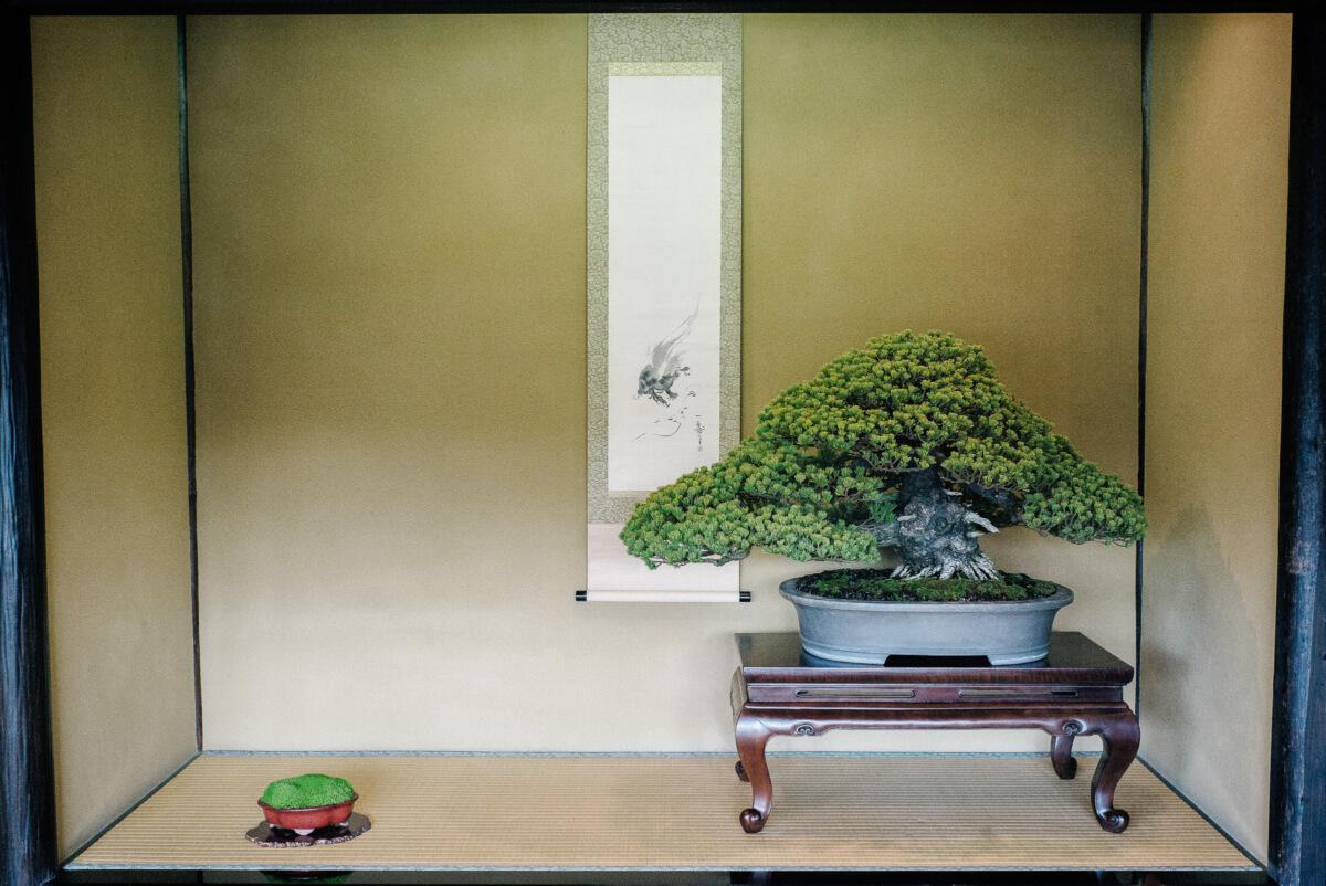 a beautiful japanese bonsai