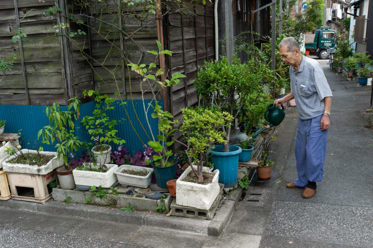 Tokyo urban garden before and after photos