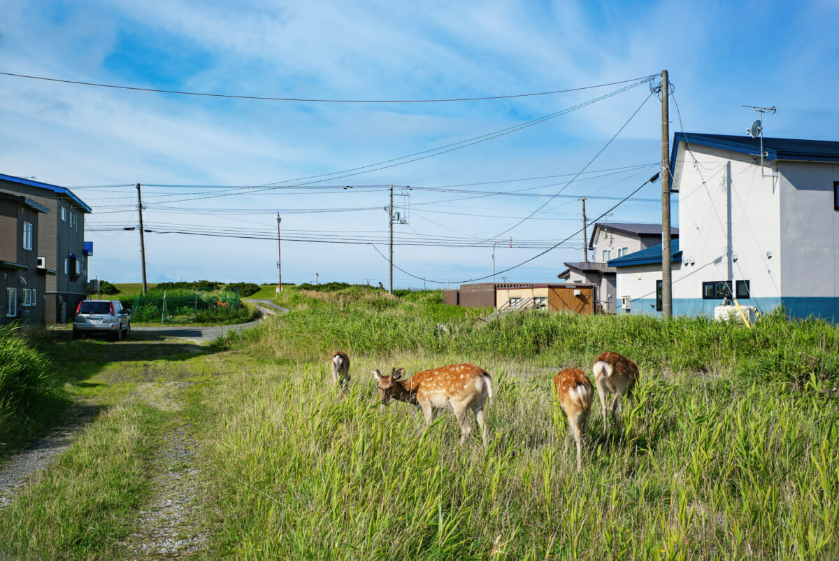 the harsh beauty of Japan's northernmost coastline