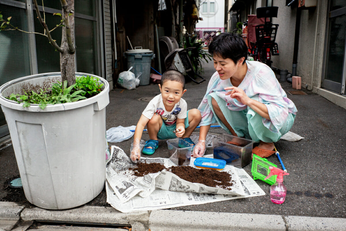 a little Japanese boy looking after his pet beetle larvae