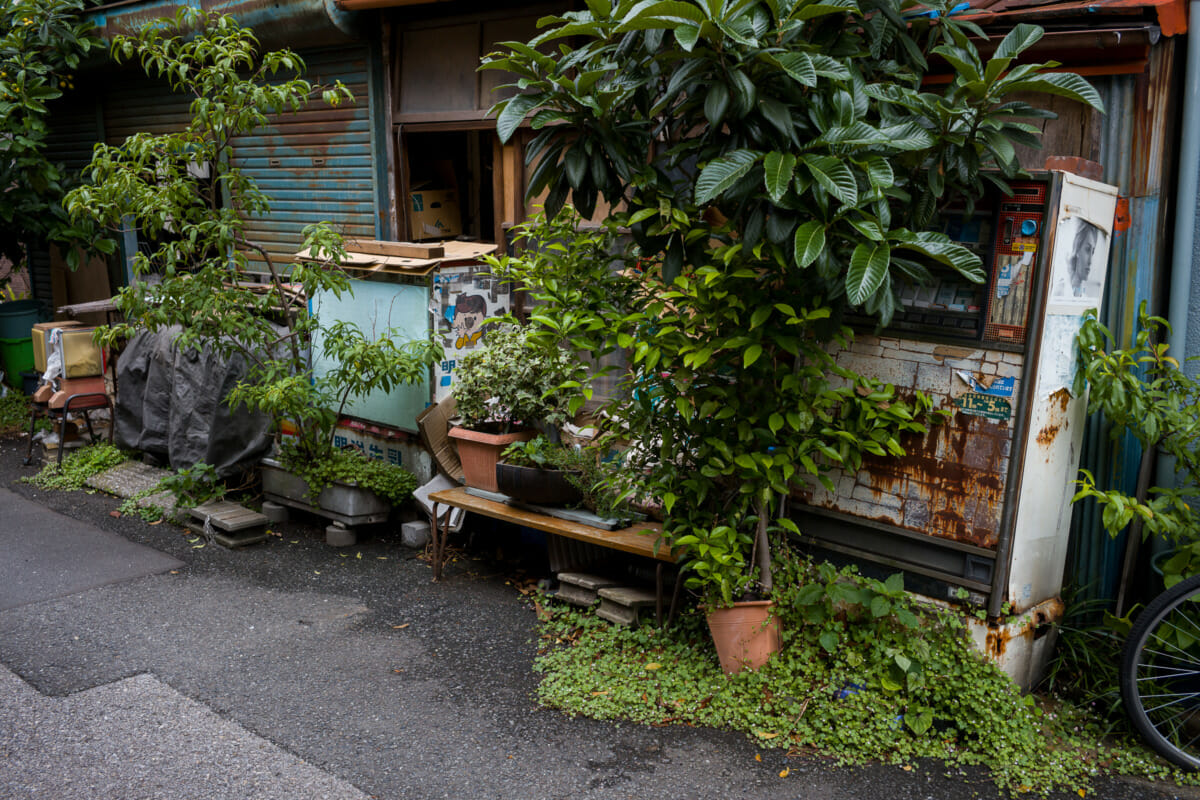 An old Tokyo house and its long-closed shop
