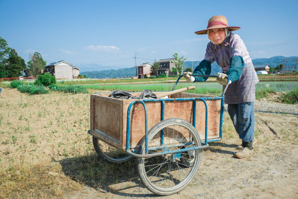 old Japanese farmer working in the fields