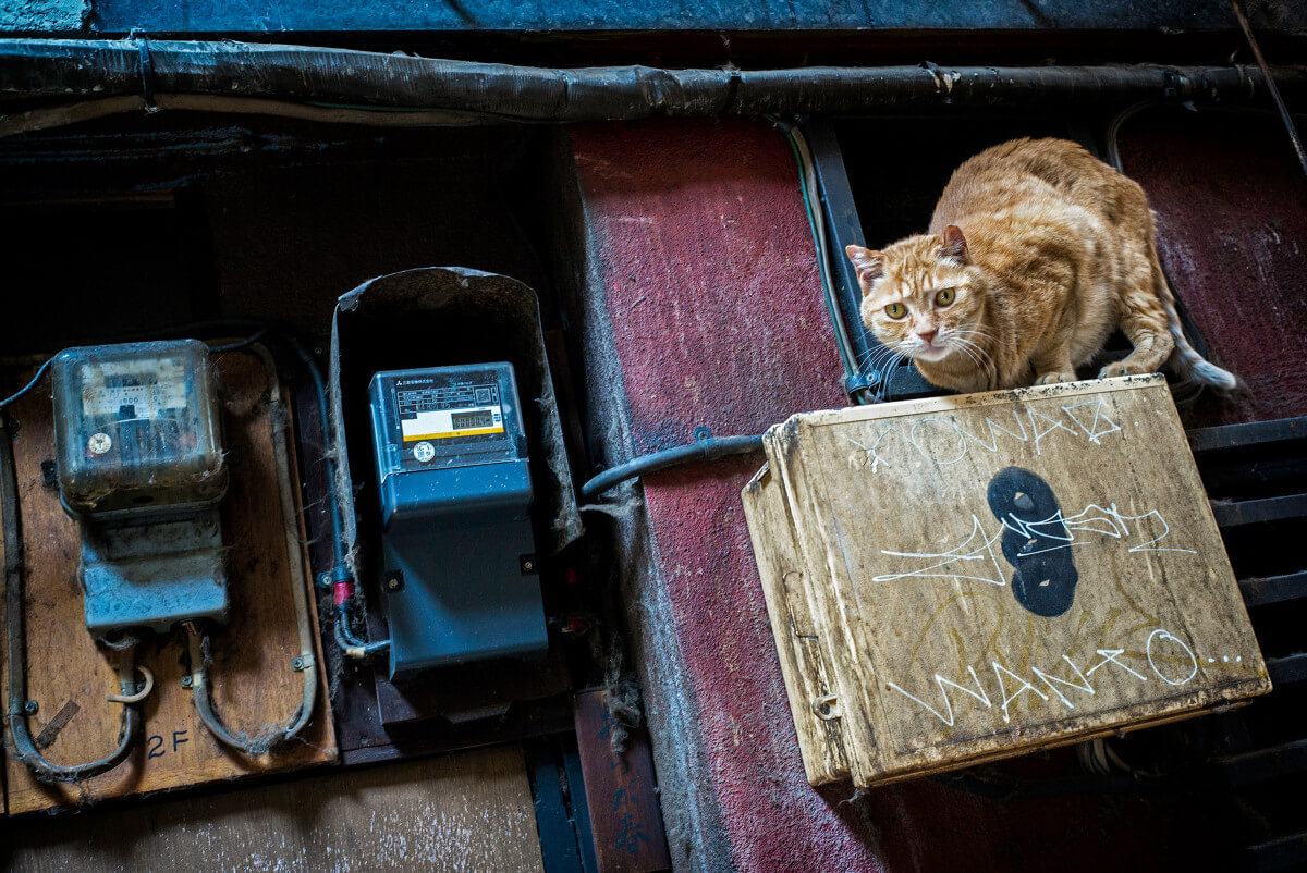 Tokyo city cat in a dirty alley