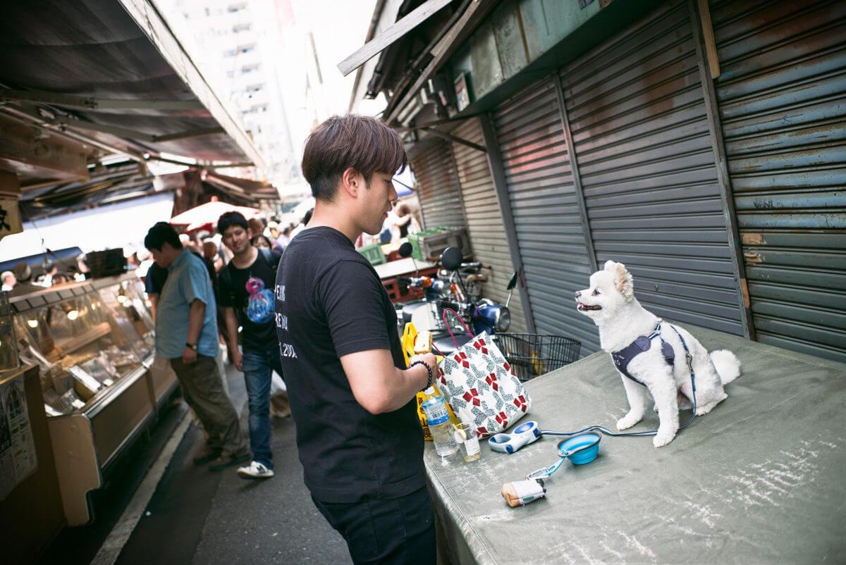 Tokyo dog love and devotion