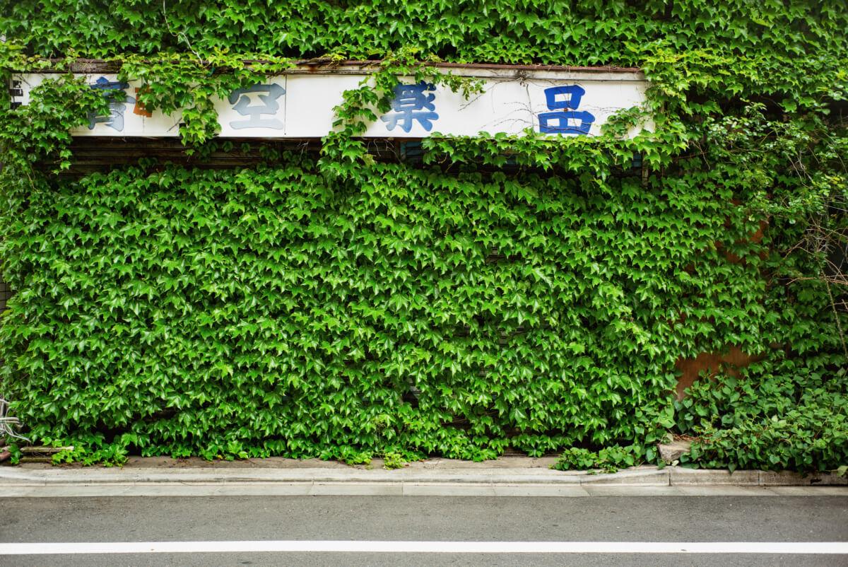 Tokyo urban greenery